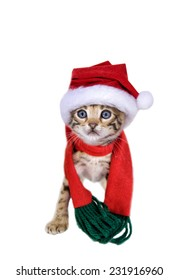 Adorable Bengal kitten in Christmas hat and scarf isolated on white