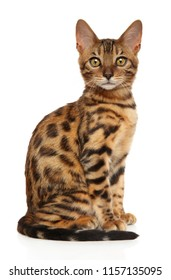Adorable Bengal kitten sitting on white background