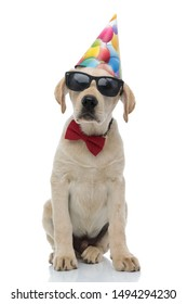 adorable birthday dog is waiting for its party, sitting on white background