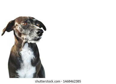 Adorable black dog on white background,illustration of dog food poster, pet lovers or world animals day and others.