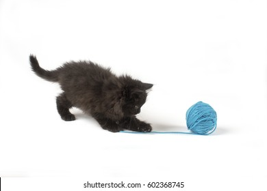 Adorable Black Kitten Playing with a Blue Yarn Ball