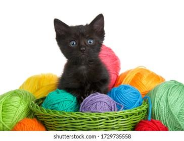 adorable-black-tabby-kitten-blue-260nw-1
