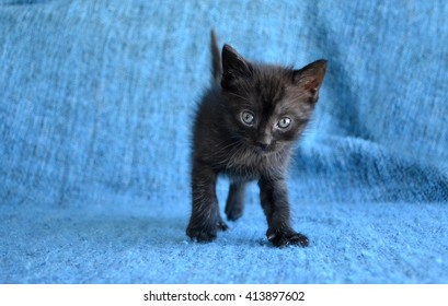 adorable black tabby kitten on blue blanket