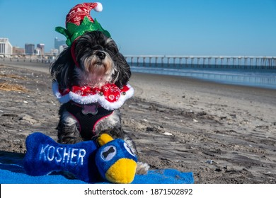An adorable black and white Havanese puppy posing in Christmas outfit and hannukkah toys on a blue towel on the beach at the edge of the ocean with a pier in the background