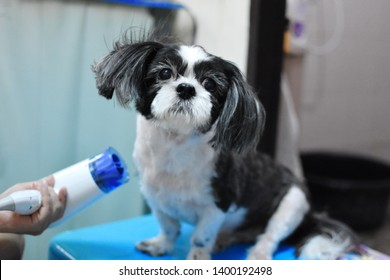 Dog Ear Cleaning Images, Stock Photos & Vectors | Shutterstock