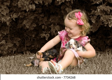 Adorable Blond Toddler Girl with Dachshund Puppies