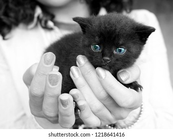An adorable blue-eyed kitten on girls hands