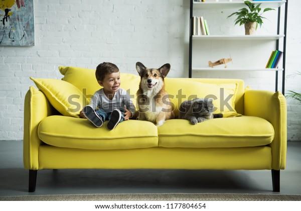 bezaubernder Junge mit weißem Korgi-Hund und schottischer Falzkatze auf gelbem Sofa zu Hause