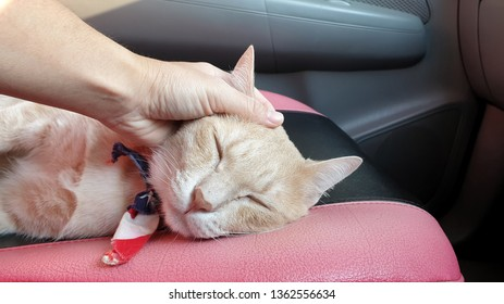 an adorable bright orange cat wearing fabric collar sleeping on the car seat inside a car when travel with owner on vacation.owner's hand stroking a cat