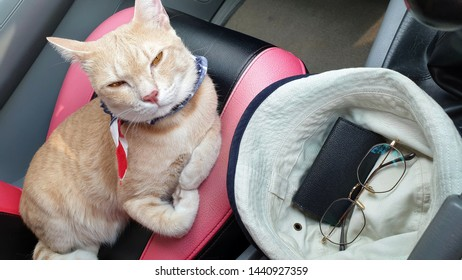 an adorable bright orange tabby cat wearing fabric collar lying on passenger seat inside car when travel on holiday with owner.Leave pet in the car concept.A cat looking camera.
