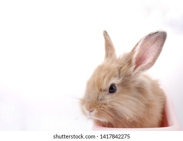 adorable brown bunny or rabbit is sitting in pink bathtub, and white background.