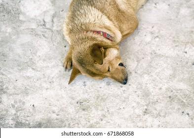 Adorable brown dog sleeping on the floor
