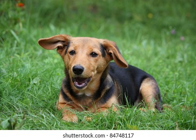 Adorable brown puppy lying on the grass