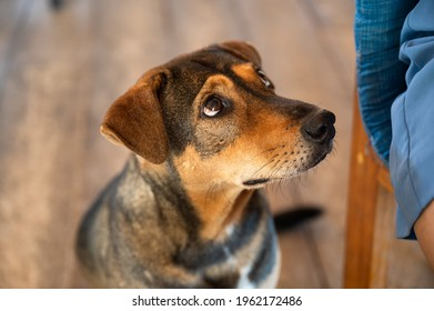 Adorable brown stray dog sitting and looking the food with sight pleading