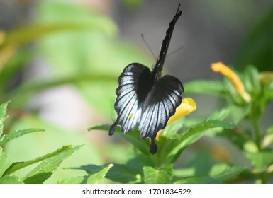 Adorable butterfly closing its wings on a flower.