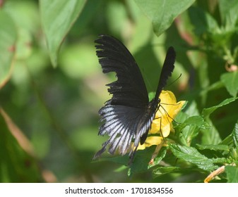 Adorable butterfly going from flower to flower