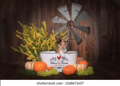 Adorable Calico Kitten in Farm Themed Setting