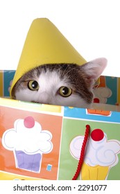 An adorable cat with a birthday hat. The cat is sitting in a gift bag.