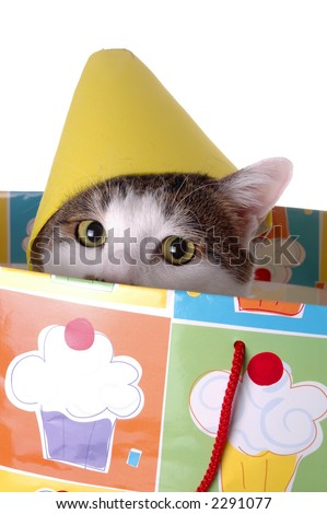 An Adorable Cat With A Birthday Hat The Is Sitting In Gift Bag