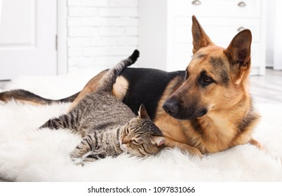 Adorable cat and dog resting together on fuzzy rug indoors. Animal friendship