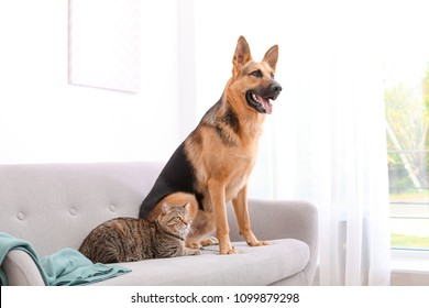 Adorable cat and dog resting together on sofa indoors. Animal friendship