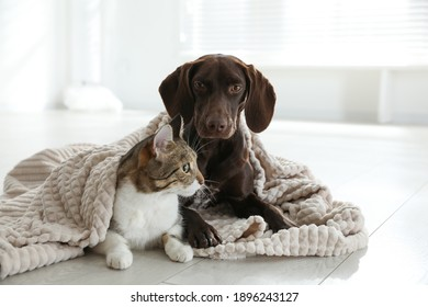 Adorable cat and dog together under plaid on floor indoors