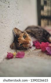 Adorable cat. Greek cat.