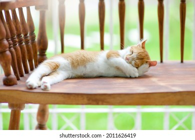 Adorable cat napping.Kitten naps on bench.Sleepy feline.Kitty taking a nap outside under warm sun.Lazy domestic pet.American curl pussy sleeping on country wooden chair.Pussycat.Purebred.
