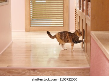 A adorable cat is opening the small door by himself in wooden style Japanese house