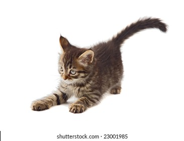 Adorable cat a over white background