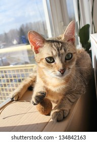 Adorable cat relaxing and playing in sun light at home
