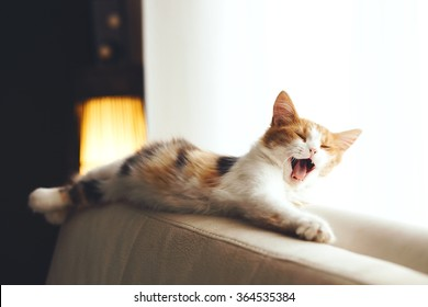 Adorable cat relaxing and yawning on the sofa at home