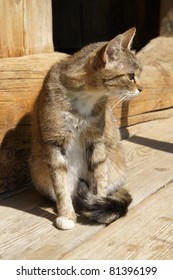 Adorable cat resting on a wooden step