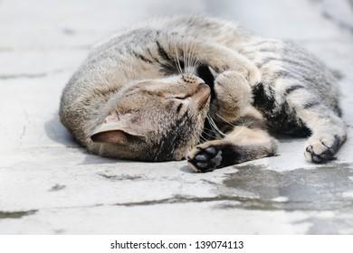 adorable cat sunbathing on a concrete path
