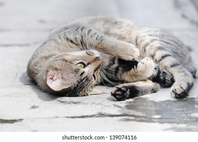 adorable cat sunbathing on a concrete path