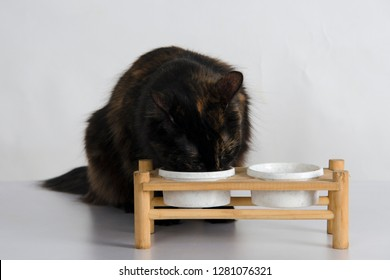 Adorable cat of tortoiseshell color eating from the plastic bowls on a wooden stand for pets (cats and dogs) in studio against white background.
