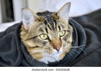 Adorable cat under a blanket
