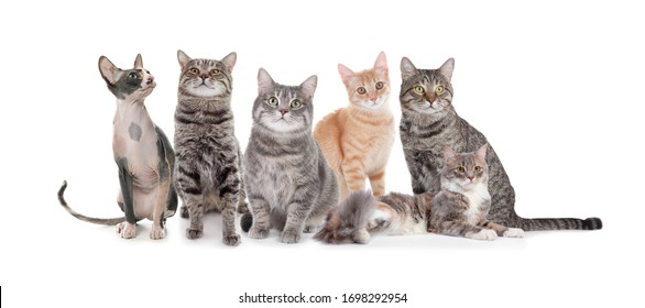 Adorable cats on white background. Banner design