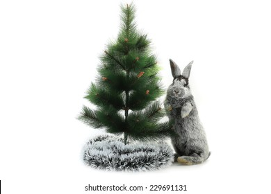 Adorable Christmas rabbits  under the tree isolated on white background
