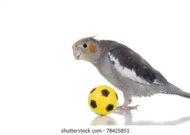 An adorable cockatiel plays with a small soccer ball.
