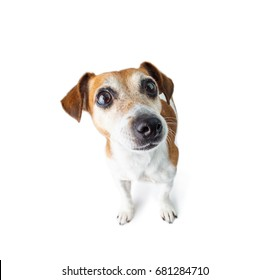 Adorable curious dog look. White background