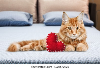 Adorable cute cat lying on a blanket with soft toy red heart. Valentine day