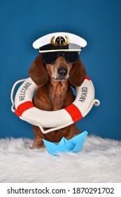 Adorable süße Dachshund Hund mit Kapitän Hut, Sonnenbrille und Lebensboje auf seinem Hals. Auf blauem Studiohintergrund