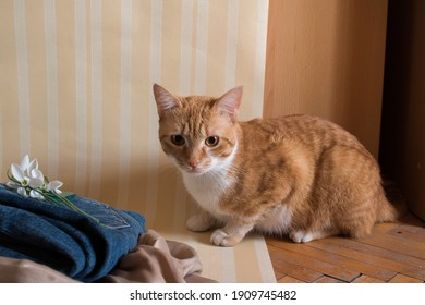 adorable and cute ginger cat