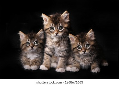Adorable Cute Kittens Awaiting Adoption