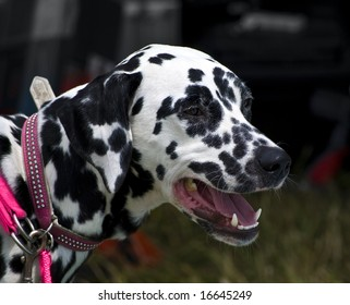 101 Dalmations Images, Stock Photos & Vectors | Shutterstock