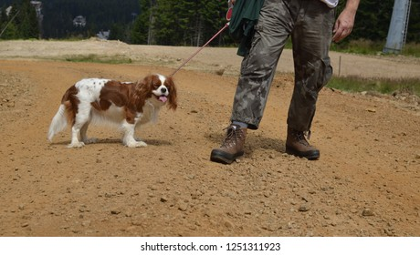 Adorable dog - Cavalier King Charles Spaniel - in a walk with her best friend dressed in casual mountain clothes