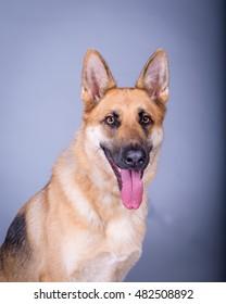 Adorable dog photo taken in studio against background.