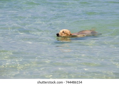 Adorable dog swimming in the blue sea water