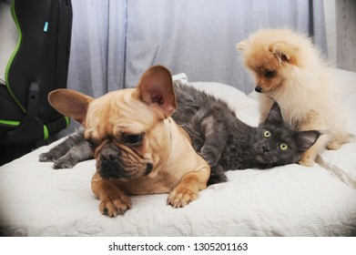 Cats And Dogs Together Images Stock Photos Vectors Shutterstock